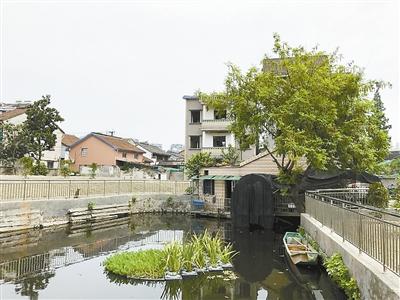 滨江今年要把这些小微水体彻底搞干净